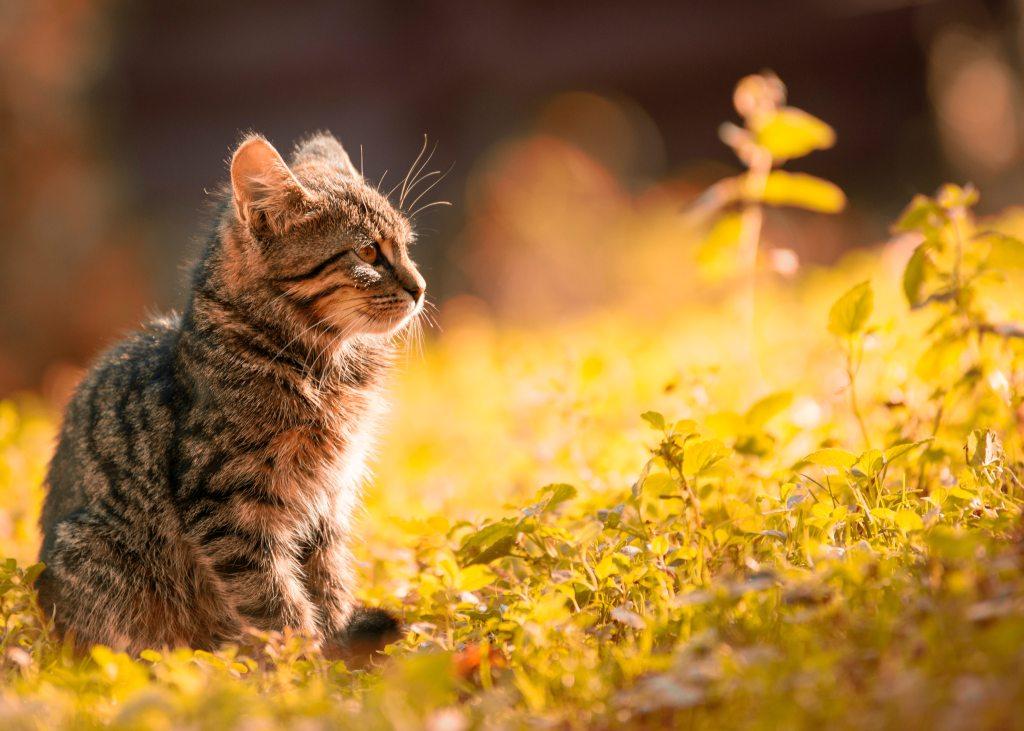 लोग सोचते हैं, बिल्ली मतलबी होती है। कुत्ते की तरह वफादार नहीं। पर ऐसा नहीं है। बिल्ली भी अपने मालिक से बहुत प्यार करती हैं। बस उसके जताने का तरीका अलग होता है।